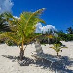 Lounge on the beach in the shade of a small palm tree.